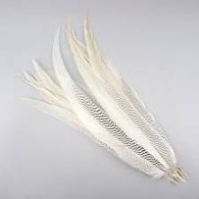 Black & White Silver Pheasant Tail Feather